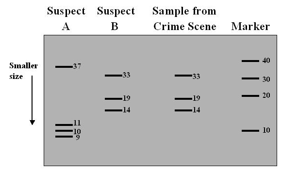 how to read dna sequence results
